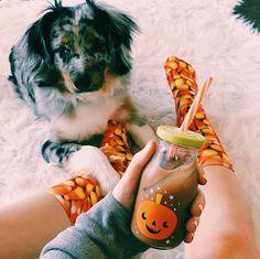 Image about dog in Fall-Autumn-Halloween 🍁 🎃 by ᏴᎬᎪᏌᎢᏌFᏌᏞ ᎬᏙᎬᎡYᎠᎪY ᎪᎬᏚᎢᎻᎬᎢᏆᏟᏚ Autumn Cozy, Fall Winter, Autumn Aesthetic, Happy Fall Y'all, Fall Halloween, Halloween Inspo, Halloween Stuff, Happy Halloween, Autumn Inspiration