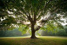 Make a memory, plant a tree! | Earthadelic