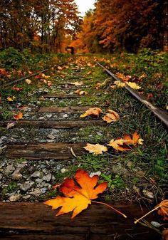 I love falling !leaves