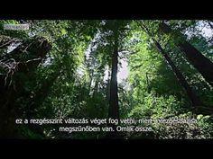 A rezgésszint változása - David Icke Merida, David, Youtube, Plants, Plant, Youtubers, Youtube Movies, Planets