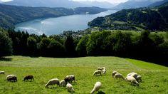 Urlaub mit Hund und/oder Katze in Kärnten - Millstätter See.  Blick auf den See…