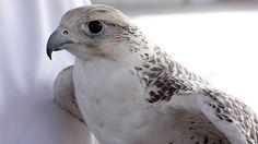 Dubai UAE Desert Bird by: ToniKPhotoghrapy