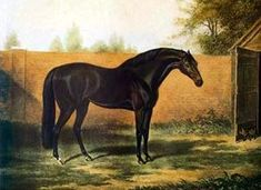 """Godolphin Arabian was one of the three founding """"arabian"""" horses for the thoroughbred breed. Only the Darley Arabian was actually an arabian. Godolphin Arabian was most surely a Barb."""