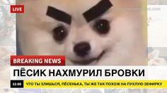 Мимими Новости (@mimimiminews) | Твиттер