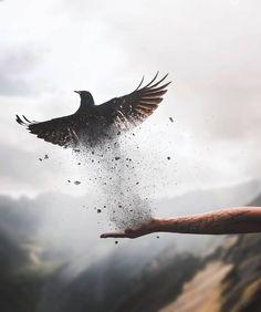 "1,215 Likes, 43 Comments - Shubham Kumar Rana (@worldwideshubham) on Instagram: ""Flying away... OP. @flickr . .. ... .... ..... ...... #igcreative_editz #gramslayers #gramswaggers…"""