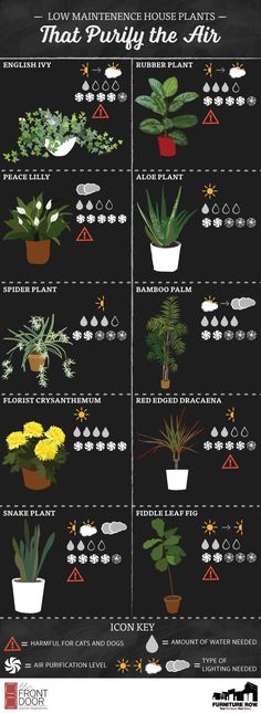 Find the best, easy-to-care-for house plants with the Top Ten House Plants Guide! This list shows how much water and sunlight each plant needs! outdoors inside decor Top Ten House Plants Guide - The Front Door By Furniture Row Plantas Indoor, Decoration Plante, Plant Guide, Spider Plants, Natural Home Decor, Garden Care, Plant Needs, Gardening Tips, Organic Gardening