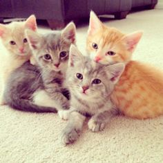 Oinnn, gatinhos! #cats #cute