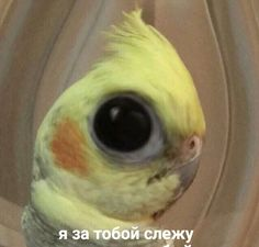 Animal Memes, Funny Animals, Hello Memes, Russian Memes, Funny Video Memes, Cool Animations, Flat Twist, Wholesome Memes, Meme Faces