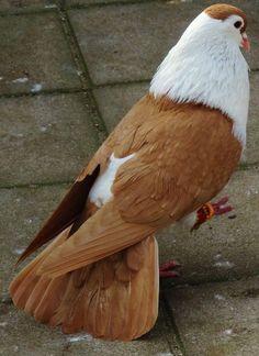 Pigeons On Balcony . Pigeons On Balcony . Bird X original Stainless Steel Bird Spikes 100 Ft Pigeons Pretty Birds, Love Birds, Beautiful Birds, Animals Beautiful, Cute Pigeon, Pigeon Bird, Exotic Birds, Colorful Birds, Exotic Flowers