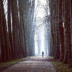 Bravo 👏@piadreamerandwanderer pour cette magnifique photo hivernale // Congratulations 👏 @piadreamerandwanderer on this wonderful photo of Versailles winter  #regram #feature #chateaudeversailles #palaceofversailles #versailles #versailleshiver #versailleswinter #parc #jardin #park #garden