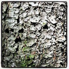 'Baumrinde' bei artflakes als Poster oder Kunstdruck