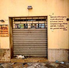 #ScattiDiScrittura direttamente da Mesagne. #shop #versi #poesia #lyric #poetry #rhyme #AlfonsoGatto #alfonsogattopoeta #cat #catsofinstagram #catoninstagram #gatodeinstagram #millennialsfortrump #gato #catlovers #pugliagram #mesagne #ig_puglia