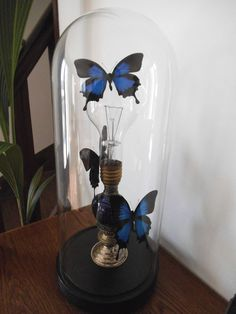 Globe aux papillons Ulysses Cabinet de curiosité / Entomologie Pièce unique