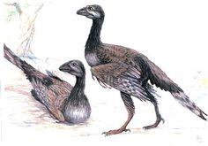 Flying Dinosaurs - Avisaurus