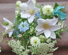 clematis, a climbing plant of the buttercup family that bears white, pink, or purple flowers and feathery seeds