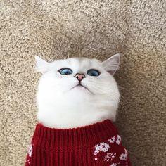 Veja nas fotos os olhos do gato Coby.