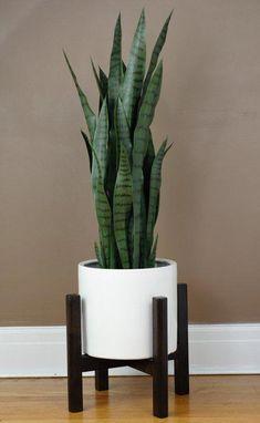 Branton Plant Stand – Best Garden Plants And Planting Big Indoor Plants, Cool Plants, Outdoor Plants, Indoor Herbs, Indoor Plant Pots, Indoor Planters, Indoor Gardening, Vegetable Gardening, Hanging Planters
