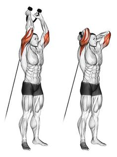 Standing Two Arm Overhead Rope Triceps ExtensionsYou can find Triceps and more on our website.Standing Two Arm Overhead Rope Triceps Extensions Cable Workout, Gym Workout Tips, At Home Workouts, Cable Machine Workout, Cycling Workout, Kettlebell Training, Weight Training Workouts, Muscle Training, Biceps And Triceps
