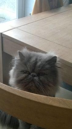 Martino Cat | Pawshake Breda