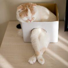 ポッちん、新しい箱ちょっと小さいかな?         うん!狭いのか丁度いいのか分からん!