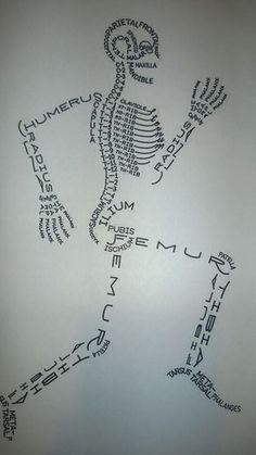 S K E L E T O N Science Art, Life Science, Skeleton System, Creative Infographic, Middle School Science, Art For Kids, Kid Art, Dns, Nurses