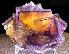 Glass-Clear Phantom Fluorite with Chalcopyrite | #Geology #GeologyPage  Location: Denton Mine, Hardin County, Illinois, USA Size: 6.4 x 4 x 6.4cm   Photo Copyright © Greenstone Fine Mineralia  Geology Page www.geologypage.com