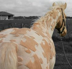 Horse clipping as an art form. Greta Alexandra Oskolkov Schneider - The world's most creative body clipper---
