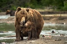 The cub looks endearingly at its mother as bond between them is clear for all to see ...