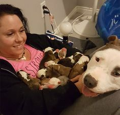 """When Grayce the rescue pit bull gave birth to 11 puppies, she put all of them into her foster mom's lap, one by one. """"I think she feels unsure still as a new mom,"""" Stevoni Wells Doyle tells The Dodo. Newborn Puppies, Dogs And Puppies, Doggies, Dachshunds, Terriers, Designer Dogs Breeds, Pitbulls, Pitbull Pictures, Angry Cat"""