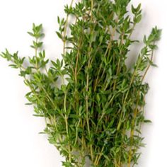 Thyme is an antiseptic, it's good as a mouth rinse when infused in hot. Water ( cool & strain) also good for killing germs around your house , infuse , and use in a spray bottle with a sm amt of white vinegar and top off with distilled water.