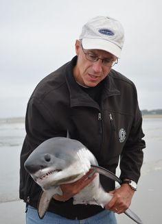 """""""You don't see this every day!"""" Juvenile salmon shark ( Lamna ditropis ) stranded in the wave wash zone, Seaside, OR, 28 August 2012 . Types Of Sharks, Seaside Oregon, Animal Action, Smart Girls, Great White Shark, Marine Biology, Shark Week, Vertebrates, People Around The World"""