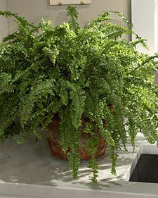 Plantas q purifican el aire
