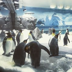 Get lost in your very own slice of Antarctica in this beautiful frozen exhibit home to the second largest species of Penguin in the world the King Penguin as well as the lively Gentoo penguins. Encounter these incredible birds up close in their icy wonderland as they dive in and out of the crystal clear water. Youll see their playful nature on the snow through the topside viewing area and their elegant underwater flight through the stunning underwater viewing window. Sea World has welcomed…