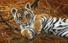 'Playful' tiger cub by Jeremy Paul