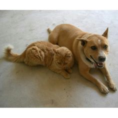 Removing Pet Stains and Odors http://www.humanesociety.org/animals/resources/tips/removing_pet_stains_odors.html ****************************************************** www.HamiltonsCarpetCare.com  Call 301-371-7800  Text 240-674-0021  #carpetcleaning #carpetcleaners #rugcleaning #professionalcarpetcleaners #petstainremoval #stainremovalFrederick #StainRemovalmontgomerycounty #frederickcounty #gaithersburg #maryland #floodrestoration #Frederickwaterrestoration #snowremoval…