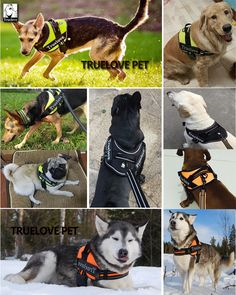 Truelove Firm Dog Harness with Heavy Duty Handle Dog Harness, Dog Leash, Dog Training Vest, Pet Dogs, Pets, Animals Of The World, Pet Supplies, Your Dog, Husky
