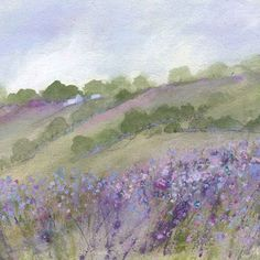wayside wild flowers - Sue Fenlon