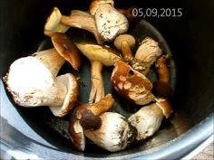 Первые грибы 2015