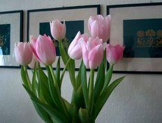 Moje drobné radosti » Blog Archive » Úžasné slané pečivo Plants, Blog, Blogging, Plant, Planting, Planets
