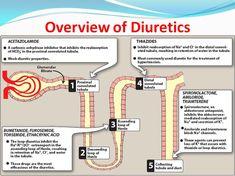 Overview of Diuretics Cardiac Nursing, Pharmacology Nursing, Nursing Career, Nursing Tips, Nursing Degree, Ob Nursing, Nursing Programs, Rn School, Pharmacy School