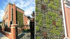 How awesome is this vertical garden?