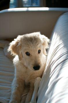 Puppy dog eyes....