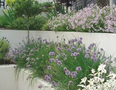 sloping garden i like these plants purple and white