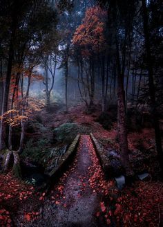 Nice to meet you. Nice to meet you. Magical Forest, Dark Forest, Autumn Forest, Deep Autumn, Forest Path, Fantasy Forest, Tree Forest, Autumn Fall, Beautiful World