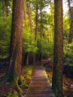 forest and woodland photography- color inspiration