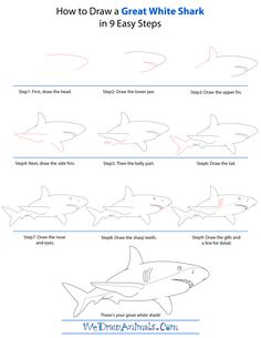 how to draw a megalodon step by step