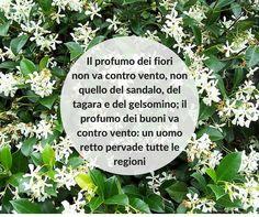 Quote  #quotes #quote #aforismi #nature #natura #flowers #citazioni #naturequotes