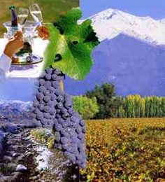 Google Image Result for http://www.letusgotravel.in/itineraries_main/itineraries/argentina/images/argentina_wine2.jpg