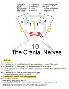 Trendy Ideas For Medical Student Cranial Nerves Nursing School Notes, Nursing Career, Nursing Tips, Nursing Programs, Nursing Schools, Ob Nursing, Pediatric Nursing, Nursing Assessment, Nursing Mnemonics