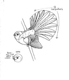 Copy of How to draw a fantail 2 KFB. Sketch Tattoo Design, Tattoo Sketches, Sketchbook Inspiration, Art Sketchbook, Doodle Patterns, Quilt Patterns, Bird Drawings, Pencil Drawings, Bird Sketch